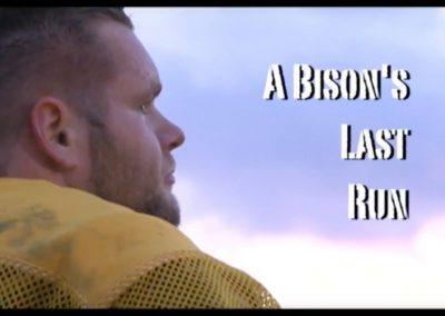 A Bison's Last Run